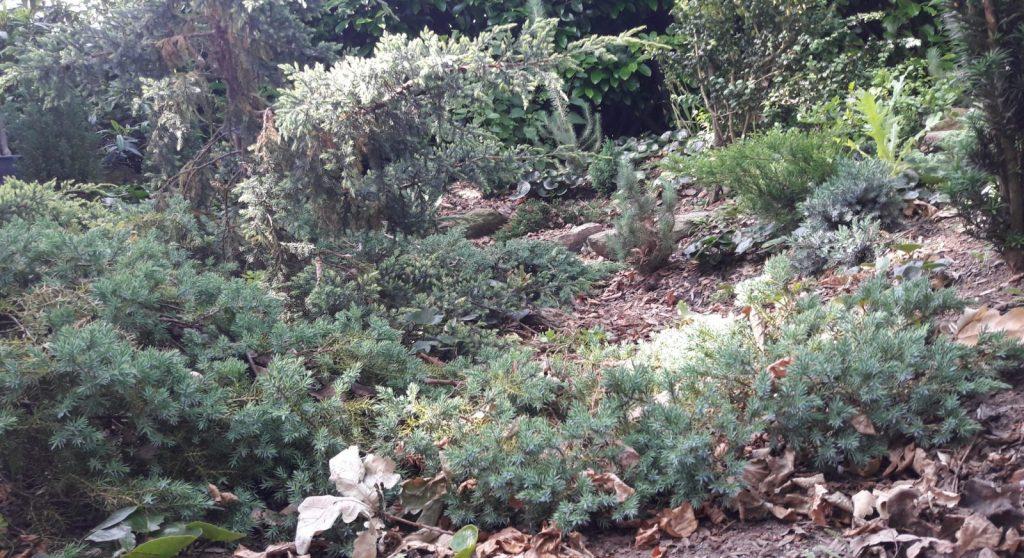 Vintergrønt regnbed